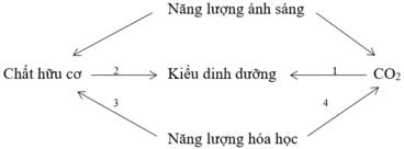 Giải bài 1 trang 129 sgk Sinh 10 | Để học tốt Sinh 10