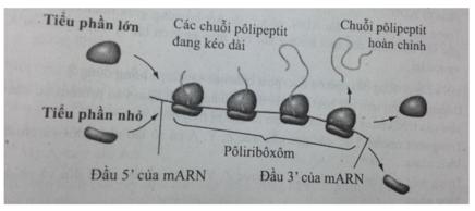 Bài tập trắc nghiệm Sinh học 12 | Câu hỏi trắc nghiệm Sinh học 12 có đáp án